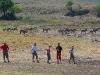 Ngoron goro, bieli Masaji