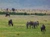 Ngoron goro, všade zver