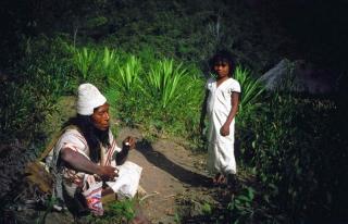 Arhuakos - otec a syn na kokovom políčku