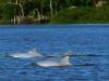 Venezuela pre rybárov a ornitologov