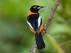 Venezuela pre milovníkov vtákov