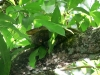 Delta Orinoco - stromový veľhad