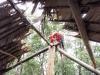 Delta Orinoco - Ara zelenokrídla