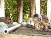Delta Orinoco - opička z filmu Amazónia vertikal