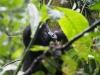 Gorily, rafting, najkrajšia hora, safari  a oceán – Afrika 2014