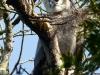 Moje skúsenosti s Harpyjou pralesnou