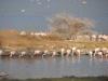 Bogoria (4)