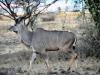 Bogoria (9)