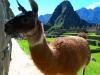 peru-bolivia-2012-145